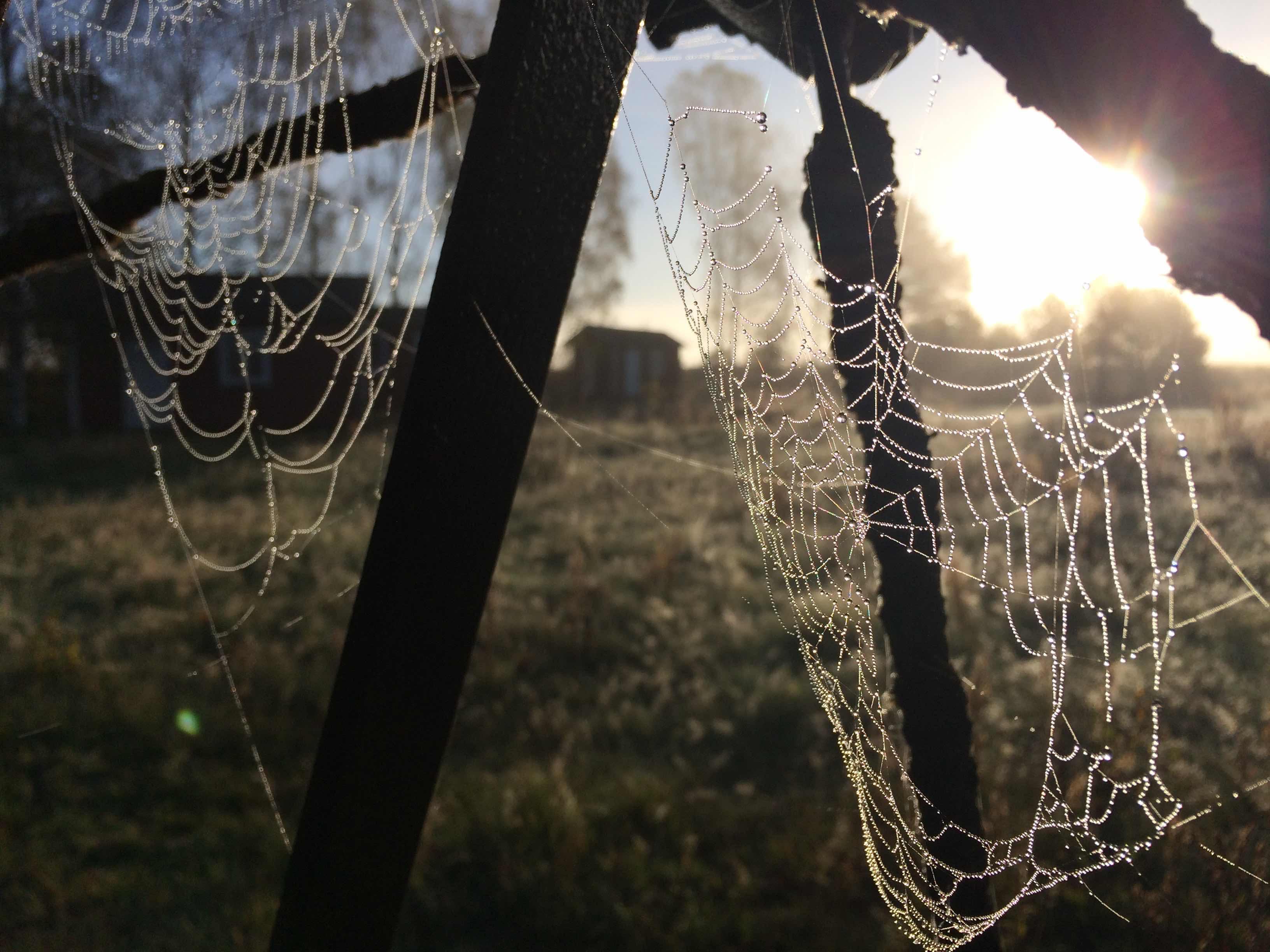 Spindeltråd3bralow